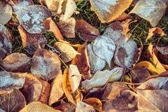 秋叶的顶视图与灰白在11月早晨 免版税图库摄影