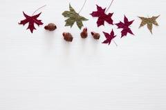 秋叶的顶视图图象在木白色背景的 免版税库存照片
