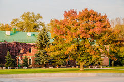 秋叶的颜色在小山布雷斯特的 库存图片