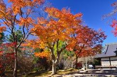 秋叶的颜色在日本庭院里 日本 库存照片