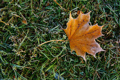 秋叶秋叶背景在地球上的一个公园,黄色,绿色在秋天公园离开 库存图片