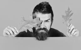 秋叶红色销售额字 有胡子和严肃的面孔的行家使用与干燥叶子 图库摄影