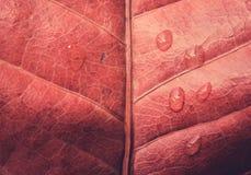 秋叶纹理和水下落 库存照片