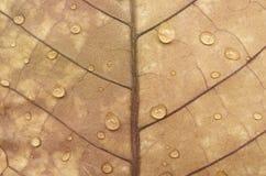 秋叶纹理和水下落 库存图片