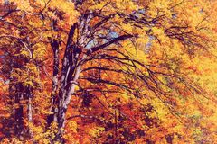 秋叶结构树黄色 库存照片