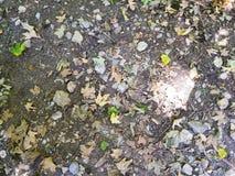 秋叶背景在地面上的 库存图片