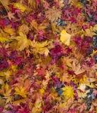 秋叶背景的秋天叶子 库存图片