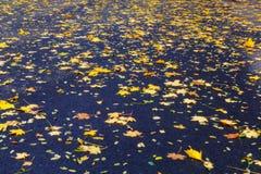秋叶背景 下落的叶子在沥青的秋天 图库摄影