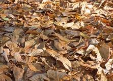 秋叶背景 全部干燥下落的叶子 库存照片
