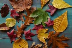 秋叶背景 划分为的叶子纹理 秋季背景 免版税库存图片