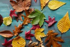 秋叶背景 划分为的叶子纹理 秋季背景 免版税图库摄影
