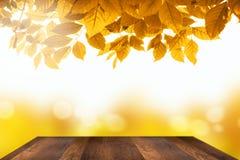 秋叶背景 库存照片