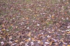 秋叶背景 图库摄影