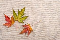 秋叶背景 库存图片
