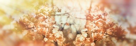 秋叶茂盛植物在森林由太阳光芒点燃了 库存照片