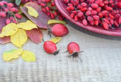 秋叶莓果野玫瑰果和一杯用伏牛花莓果在一个木板 免版税库存图片