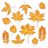 秋叶被设置的向量 免版税库存照片