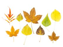 秋叶设置了 秋天背景收集离开白色 库存照片