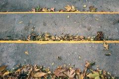 秋叶顶视图在具体台阶的 免版税库存照片