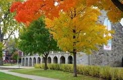 秋叶颜色在弗雷德里克顿,加拿大 免版税库存图片