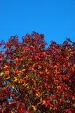 秋叶颜色火焰 图库摄影