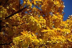 秋叶颜色火焰 库存照片