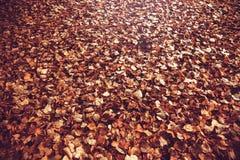 秋叶黄色 叶子凋枯了 库存照片