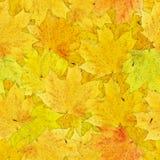 秋叶黄色 免版税图库摄影