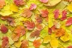 秋叶,五颜六色的秋天背景 免版税图库摄影