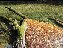 秋叶,克罗地亚自然, 5 免版税库存照片
