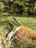 秋叶,克罗地亚自然, 9 图库摄影