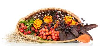 秋叶,在白色隔绝的篮子特写镜头的花揪 库存照片