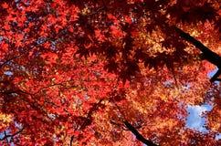 秋叶,日本的颜色 免版税图库摄影