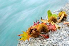 秋叶,栗子,石头,河 图库摄影