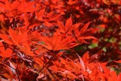 秋叶,秋天的概念 库存照片