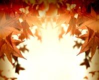 秋叶,秋天茂盛植物-秀丽本质上 免版税库存照片