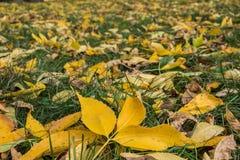 秋叶,背景和室外 免版税库存图片