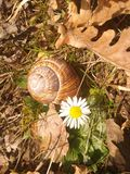 秋叶,蜗牛,花 免版税图库摄影