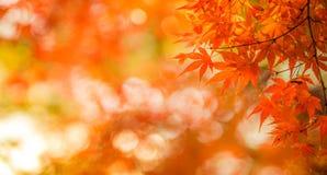 秋叶,非常浅重点 图库摄影