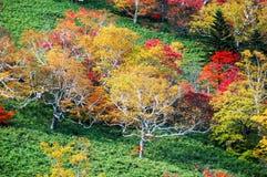秋叶,黄色离开,红色离开,秋季色彩, Nissho通行证,日高市山,带宏, Tokachi, Doutou,北海道,日本,土地 库存图片
