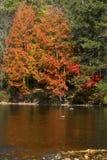 秋叶, Conn的明亮的反射在法明顿河的 免版税库存图片