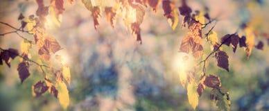 秋叶-在森林秀丽的秋天茂盛植物本质上 免版税库存照片
