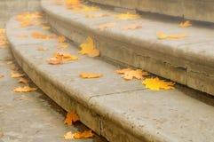 秋叶 在石楼梯的下落的干燥橙色槭树秋叶 秋天背景特写镜头上色常春藤叶子橙红 库存照片