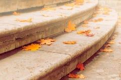 秋叶 在石楼梯的下落的干燥橙色槭树秋叶 秋天背景特写镜头上色常春藤叶子橙红 免版税库存图片