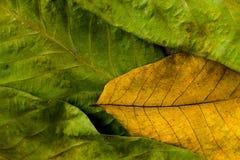 秋叶 在老木桌上的五颜六色的叶子坚果 叶子背景 库存图片