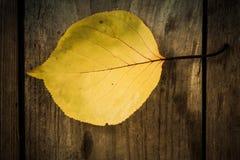 秋叶 在老木桌上的五颜六色的叶子坚果 叶子背景 库存照片
