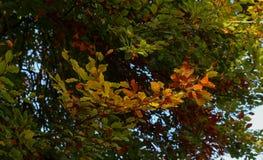 秋叶晴朗的秋天风景五颜六色的叶子背景 免版税库存图片