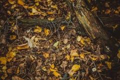 秋叶黄色和绿色在地面上在森林里 库存照片