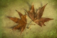 秋叶绿色艺术性的背景 图库摄影