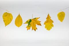秋叶 免版税库存照片